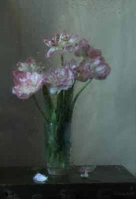 Тюльпановая акварелька тюльпаны махровые