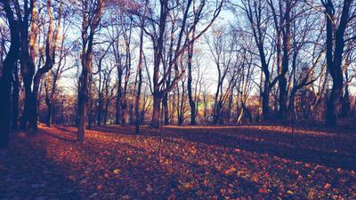 Парк во время заката Санкт-Петербург Питер закат природа солнце парк осень
