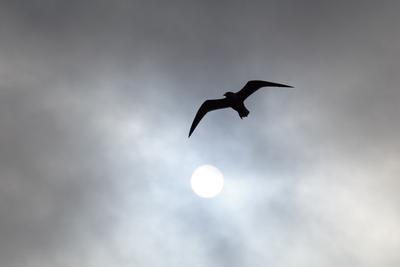 во тьме темнота черно-белое птица небо