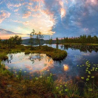 Картинное утро Ленинградская область рассвет лето сосны озеро отражение деревья берег небо облака болото