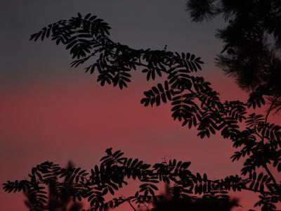 Середина июля - сине-красный закат - скоро полночь закат sony dsc-hx200 moscow suburb