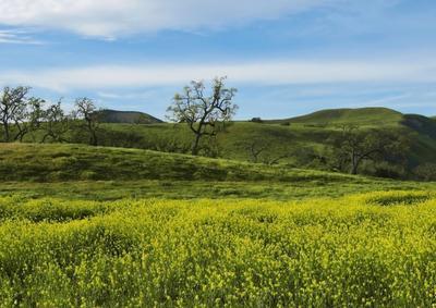 Весенним днём в долине