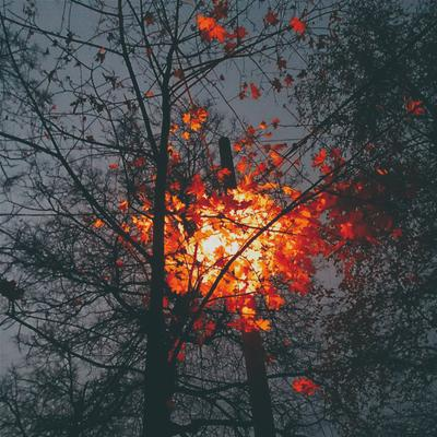 Последние листья осени листья осень ночь фонарь