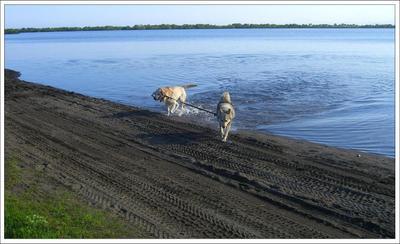 - Предлагаю обсудить дальнейшую программу совместного проживания. собака