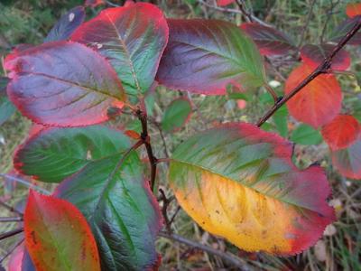 Про осень природа осень красота