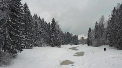 Пасмурный день Павловский парк зима речка лес