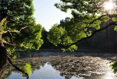 пруд пруд, вода. деревья, зелень, лучи, солнце, вечер, филевский парк