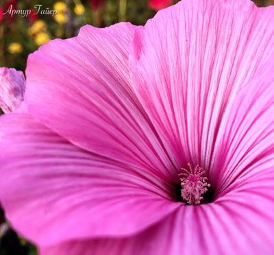 *** цветок цветы