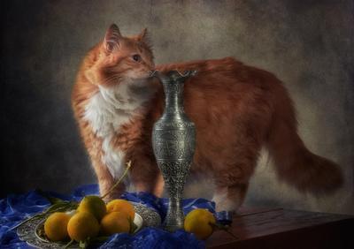 Эксперт по востоку. натюрморт композиция постановка сцена фрукты кот питомец друг рыжий