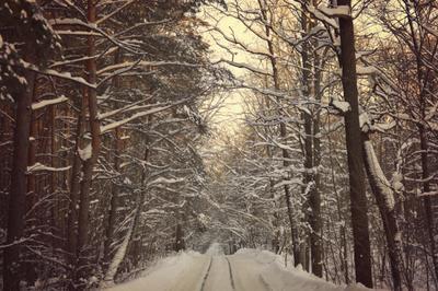 через лес лес дорога снег мороз фото пейзаж вечер