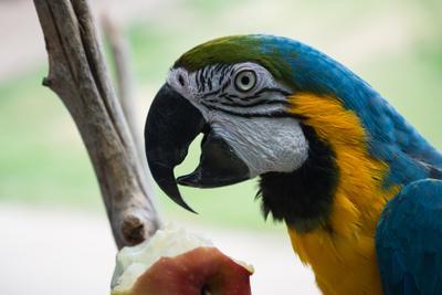 Попугай кушает яблоко попугай зоопарк яблоко
