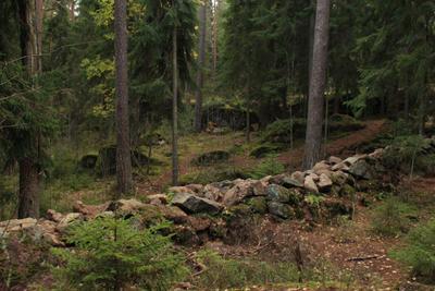 Монрепо Монрепо Парк Твердыш Выборг осень заповедник лес ЛО
