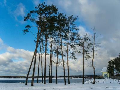 Ждущие на берегу зима сосны озеро облака