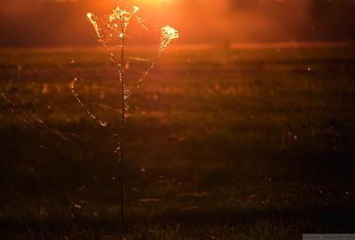 Паутинка на закате закат