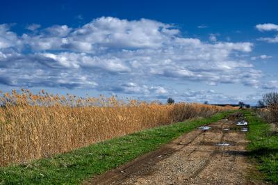 *** Красота небо обложка природа дорога поле зеленый цвет лето Россия пейзаж
