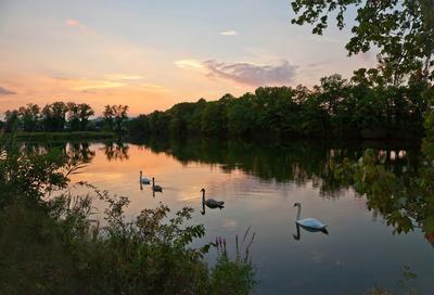 ...А мимо гуси лебеди... пейзаж природа закат небо облака лебеди животные