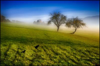 ***2+2*** два дерева, туман
