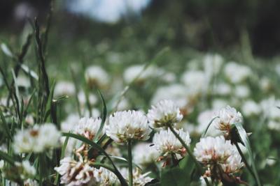 *** природа цветы лето