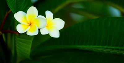 *** природа цветы