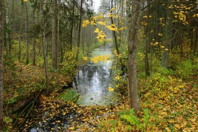 Лесной ручей осень ручей золото листьев