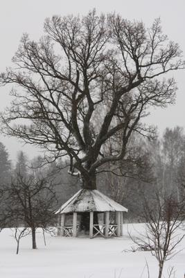 Древо мира Псковская область зима дерево снег беседка