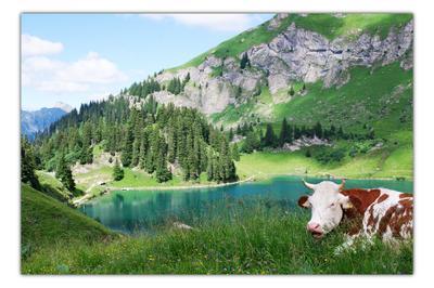 пастораля пастораль альпы корова