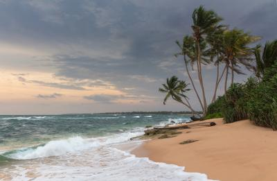 Ветер с океан дул... Шри Ланка берег ветер волны океан пальмы песок тени