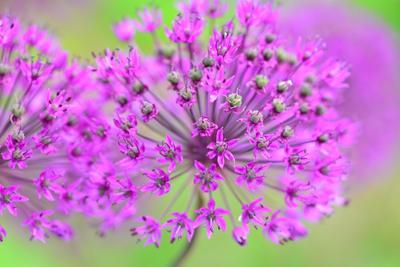 Цветочный салют цветы