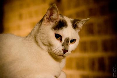 Кошка тель авив яффо кошка