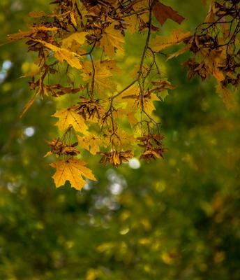 На пороге Осени.... Осень красота природа парк отдых