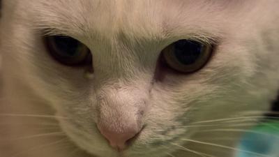 Кошка Кот кошка