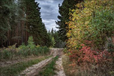 В октябре. осень пейзаж лес