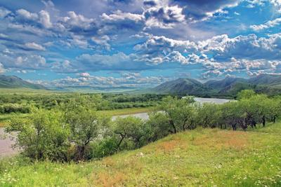 У изгиба реки трава река пейзаж облака небо лето деревья берега