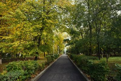 В парке Осень парк аллея