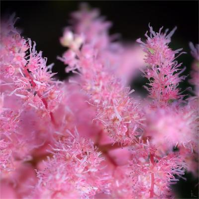 Эмо эмо, розовый, черный, макро
