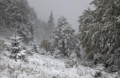 Однажды в октябре Карпаты снег горы