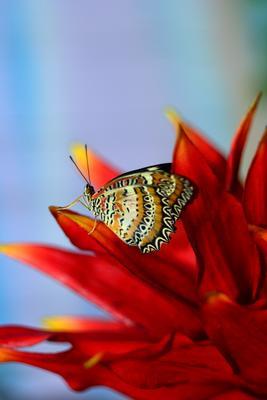 тропическая красота