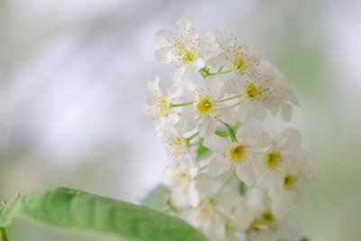 Нежность весны природа крупным планом насекомые белые цветы весна цветение макро белый нежность