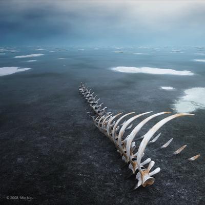 На краю света Скелет кита, море