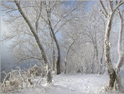 *** природа снег деревья вода мороз