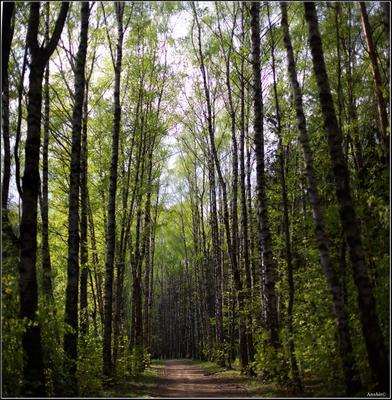 майский лес лес Москва Солнцево весна май