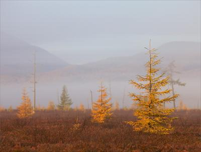 Осень на перевале Сахалин перевал осень лиственицы