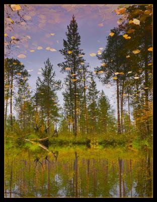 Листопад осень тайга болото водоем листопад