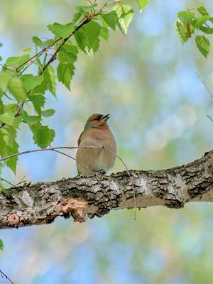 Весёлый месяц май Птицы лес природа