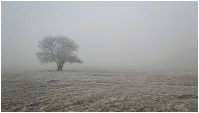 Crimea. Winter&Fog