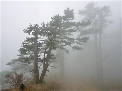 В тумане Комбопло Крым туман Ялта