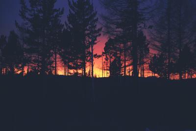 Вечерний лес.