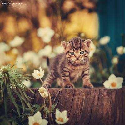 Михасик... кот малыш весна котенок Михасик
