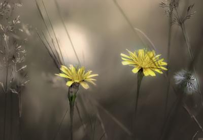 ***Цветы весны.