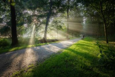 Рассвет в парке туман рассвет утро пейзаж